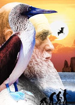 Elderly Darwin